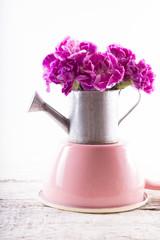 Carnations flower on white