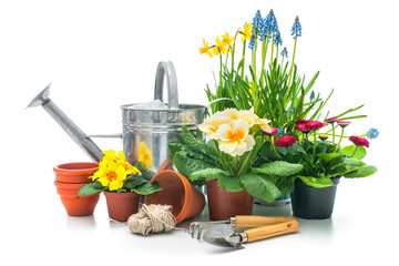 Spring flowers with gardening tools isolated