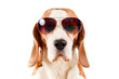 sentry dog in sunglasses  on white - 78438698