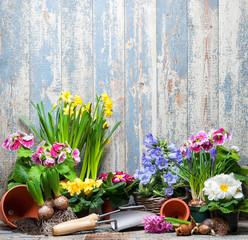 Frühling, Blumen, Gartenarbeit