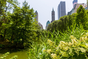 Central Park flowers Manhattan New York