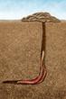 Leinwanddruck Bild - sandworm