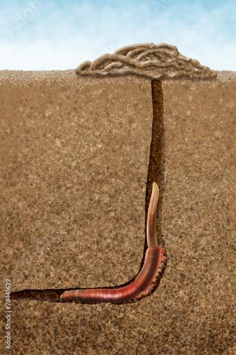 Leinwanddruck Bild sandworm
