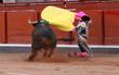 Leinwanddruck Bild - torero