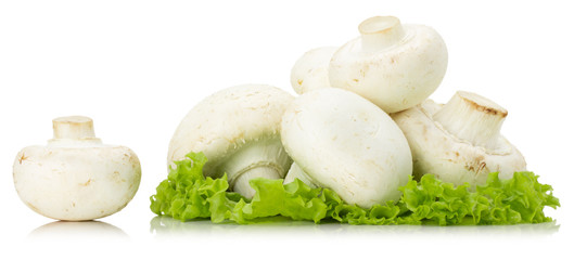 champignons with lettuce isolated on the white background