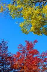 Autumn foliage in the Kyu-Furukawa Gardens, Tokyo