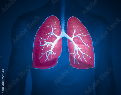 canvas print picture lungs