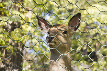 Cute deer in the zoo