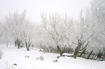Country garden in winter during  cloudy day.