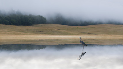 Crane in lake at dawn