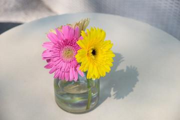 daisy-gerbera in glass vase