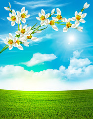 Branch of flowers of snowdrops on a background of blue sky with
