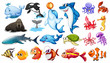 Fish - 78469625