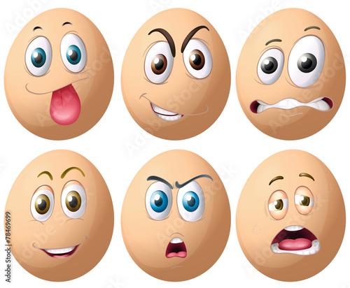 Eggs - 78469699