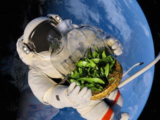 Seedlings in space.
