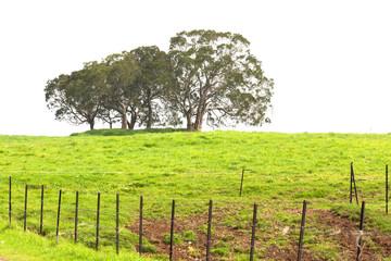 bosquet d'arbres sur fond blanc