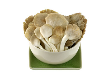 Fresh Indian Oyster (Phoenix) Mushroom