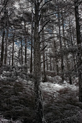 Deep infrared forest