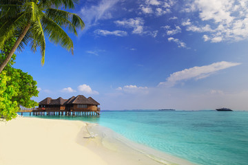 Tropical island with sandy beach and palm trees