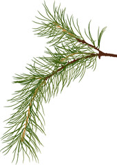 green pine tree one branch isolated illustration