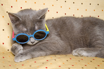 Gattino da spiaggia con occhiali da sole
