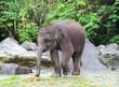 baby elephant eats grass - 78478062