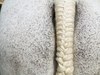 Plaited Tail of a dappled white horse