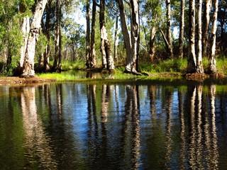 Butterfly Springs, Limmen National Park, NT, Australia
