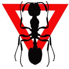 ant, monomorium pharaonis