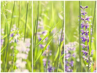 Collage di primavera