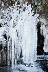Long icicles hanging from tree branches