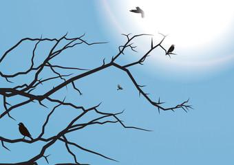ramo uccelli