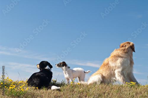 canvas print picture drei Hunde auf  einer wiese