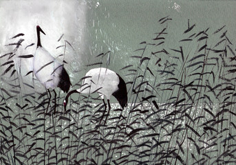 birds stork in the reeds