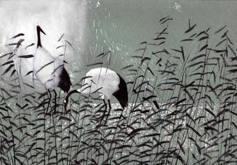 birds stork in the reeds