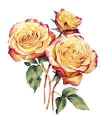 Watercolor with three yellow-pink roses composition