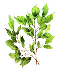 Watercolor with two green leaves branches