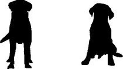 2 schwarze Labrador Retriever, vector sihouette