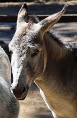 Donkey portrait