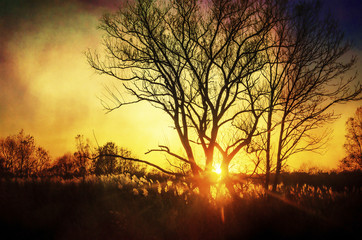 Beautiful sunset, trees in meadow, landscape against sun