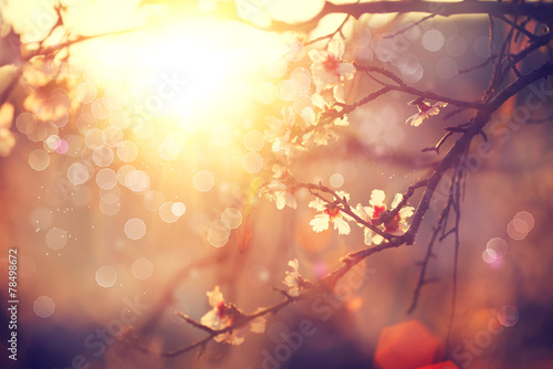 Spring blossom background. Beautiful scene with blooming tree Poster
