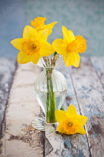 canvas print picture Daffodils
