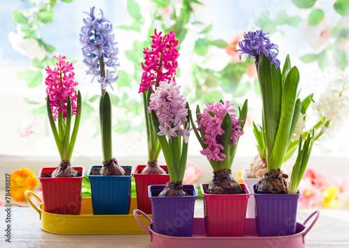 Papiers peints Lilac multicolored hyacinth