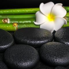 beautiful spa concept of zen basalt stones, white flower frangip