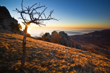 aerial view from mountains with tree of sunrise above the sea