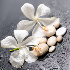 Beautiful spa still life of delicate white hibiscus and stones o