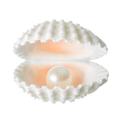 open beautiful soft white cockleshell with pearl is isolated on
