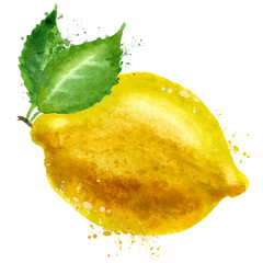lemon vector logo design template. food or fruit icon.