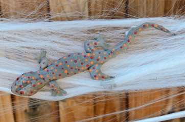 Fake Halloween Tokay Gecko decoration trapped on spider web