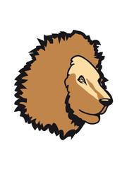 Lion proud king